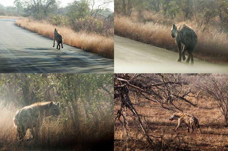 safari-africa-de-sud-botswana-06