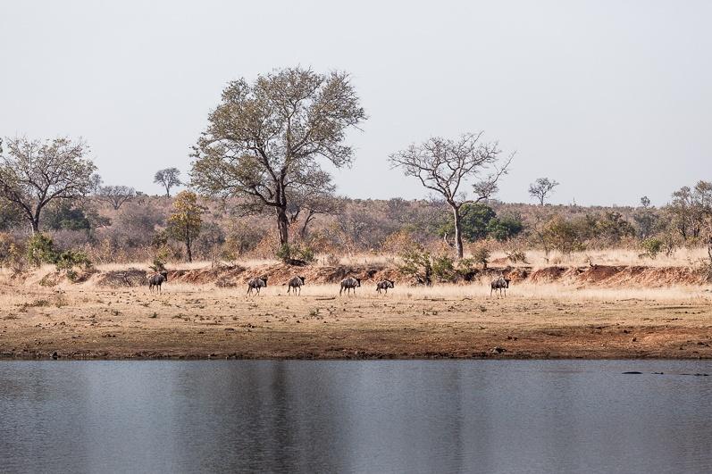 safari-africa-de-sud-botswana-1