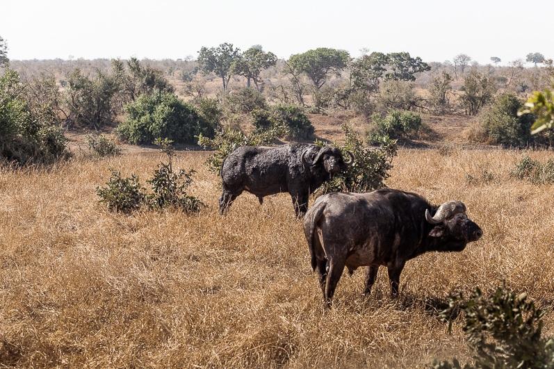 safari-africa-de-sud-botswana-10