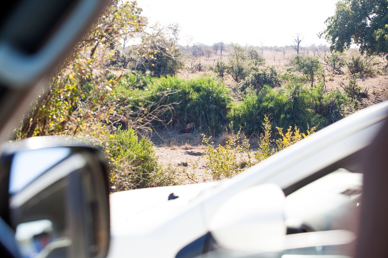 safari-africa-de-sud-botswana-11
