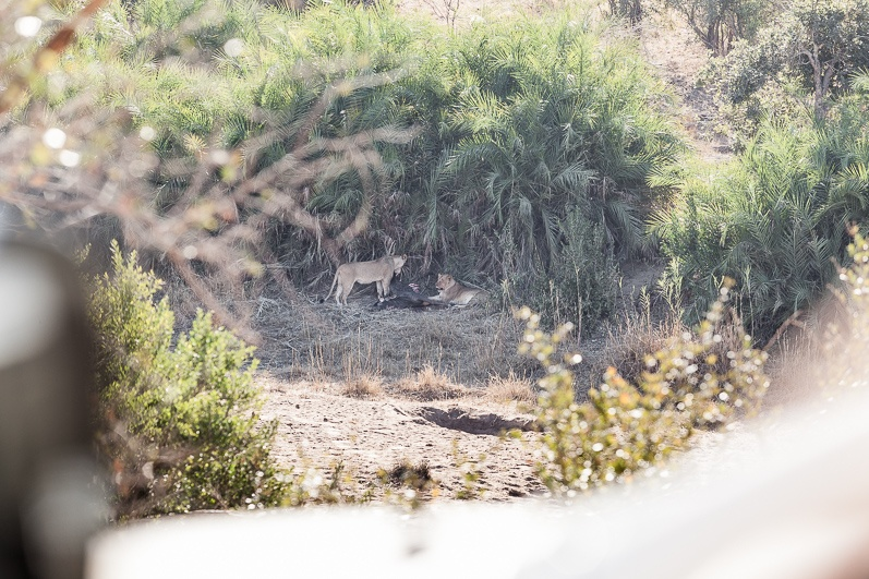 safari-africa-de-sud-botswana-12