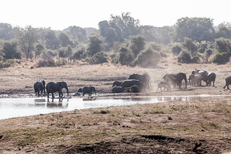 safari-africa-de-sud-botswana-13