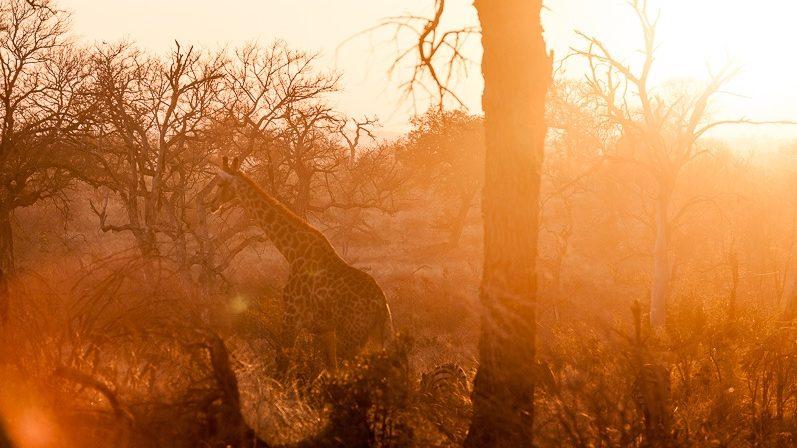 safari-africa-de-sud-botswana-14