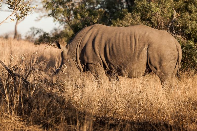 safari-africa-de-sud-botswana-15
