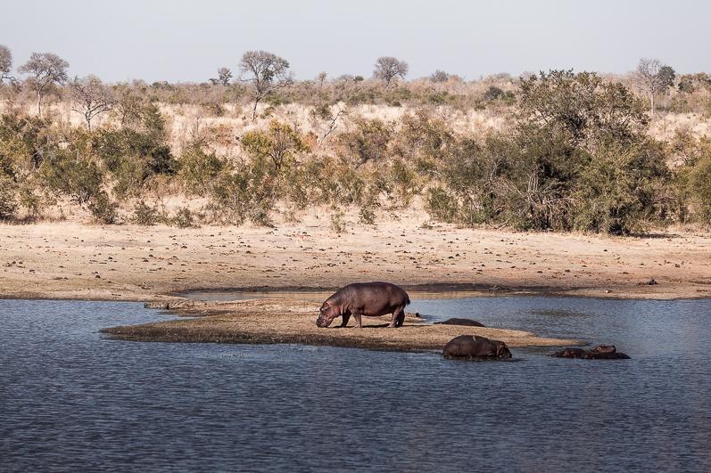 safari-africa-de-sud-botswana-2