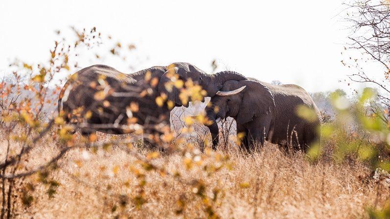 safari-africa-de-sud-botswana-3