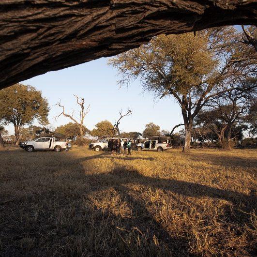 safari-africa-de-sud-botswana-37