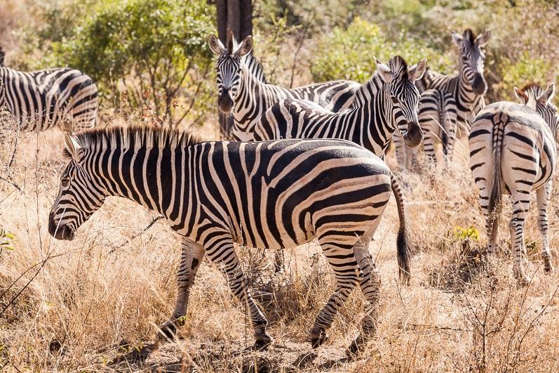 safari-africa-de-sud-botswana-4