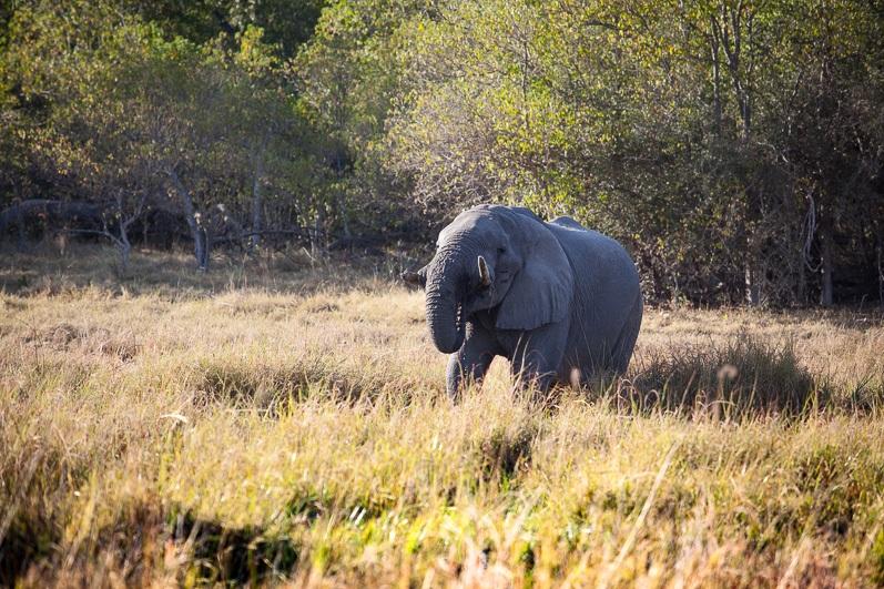 safari-africa-de-sud-botswana-40