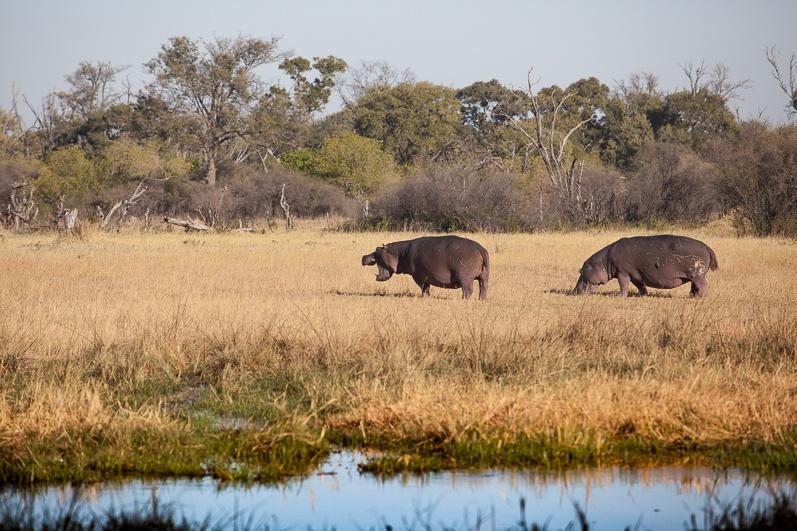 safari-africa-de-sud-botswana-41