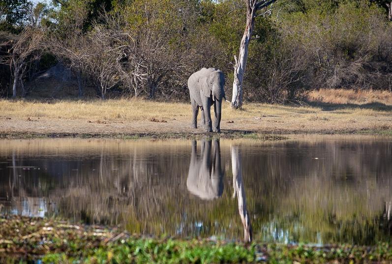 safari-africa-de-sud-botswana-42