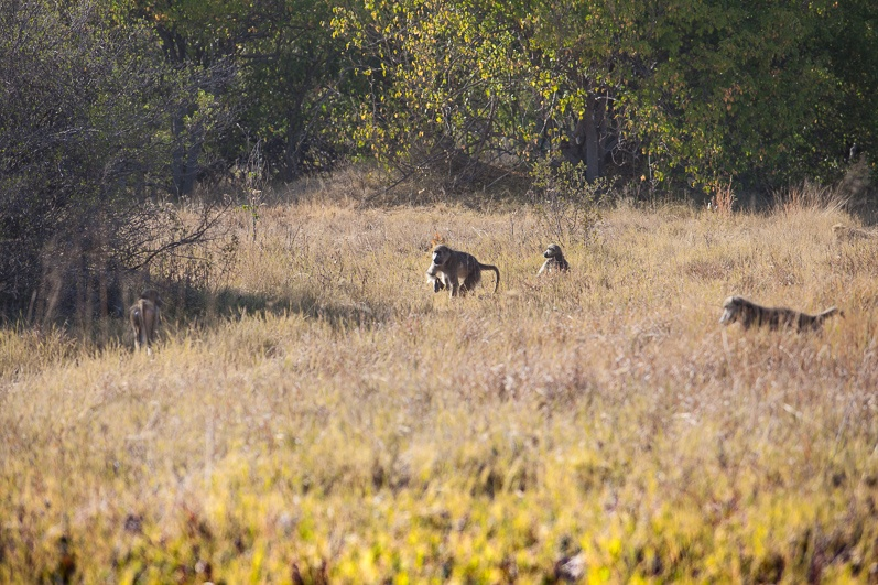 safari-africa-de-sud-botswana-43