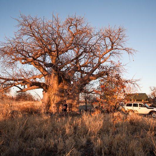 safari-africa-de-sud-botswana-49