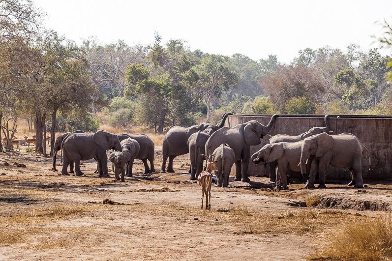 safari-africa-de-sud-botswana-5