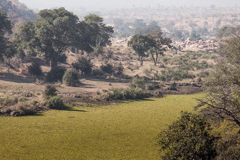 safari-africa-de-sud-botswana-6