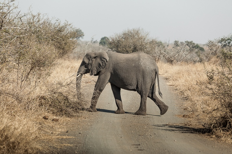 safari-africa-de-sud-botswana-7
