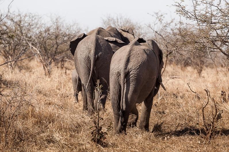 safari-africa-de-sud-botswana-8